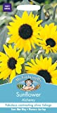 Mr Fothergills - Pictorial Packet - Flower - Sunflower Alchemy - 40 Seeds