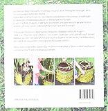 Image de Mit Weiden bauen: Anleitungen für Zäune, Laubengänge, Wigwams, Sitzplätze und grüne Kuppeln