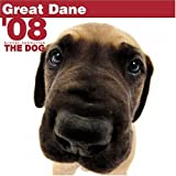 img - for Great Dane 2008 Square Wall Calendar (German, French, Spanish and English Edition) book / textbook / text book