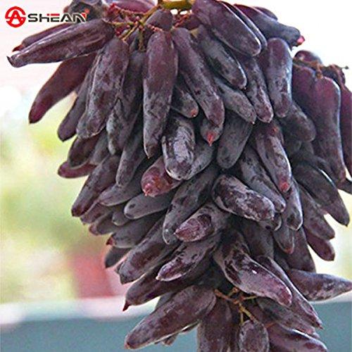 Finger Grapes
