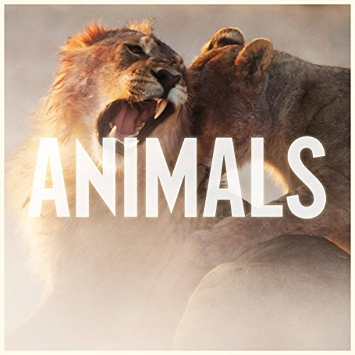 Maroon 5 - Animals - Zortam Music