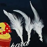 50 St. gefärbte Hahn Federn für Deko 10 -15 cm - weiß von SODIAL(R)