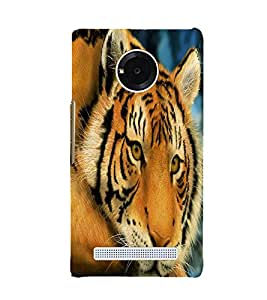 Fuson Premium Back Case Cover Lion on Rocks With Red Background Degined For YU Yuphoria::Micromax Yuphoria YU5010