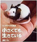 パンダマウス写真集 小さくても、生きている