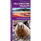 Yellowstone Wildlife: A Folding Pocket Guide to Familiar Animals of the Yellowstone Area (Pocket Naturalist Guide Series)
