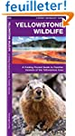 Yellowstone Wildlife: An Introduction...