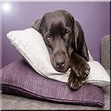 Rikki Knight Black Labrador Dog on Pillows Design Art Ceramic Tile, 4 by 4-Inch