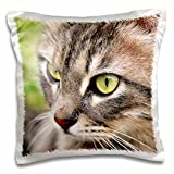 Taiche Photography Cats - Long Haired Tabby Cat - 16x16 inch Pillow Case (pc_16944_1)
