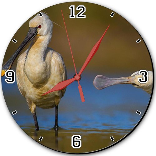 """Nature Spoonbills Bird Water Pond 10"""" Quartz Plastic Wall Round Clock Classic Analog Setting Customized Inch Hand Needle Msd Made To Order Support Ready Dial Time Personalized Gift Battery Operated Accessories Graphic Designed Model Hd Template Wallpaper"""