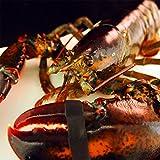 【築地魚群】活オマール海老(ロブスター)(600gサイズ)【アメリカ・カナダ産】 1尾