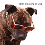 Here's Looking At You Staffordshire Bull Terrier Birthday Card