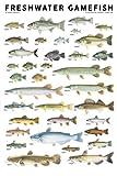 Freshwater-Gamefish-of-North-America-Poster