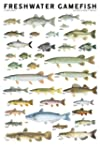 Freshwater Gamefish of North America...