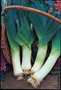 SeeKay Leek Giant Winter - Appx 200 seeds