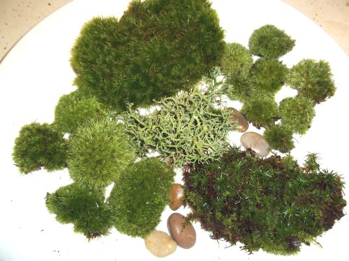 Live Moss Assortment for Terrariums - Frog, Haircap, Cushions, Rocks, Lichen