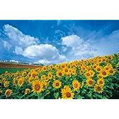 四季の詩 1000ピース ひまわり畑 (北海道) (50cm×75cm、対応パネルNo.10)