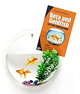 Wall mounted fish bowl bubble for goldfish for Fish bowl amazon