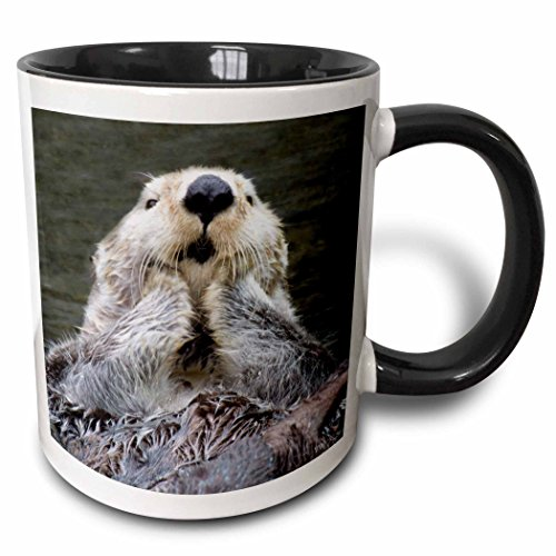 3dRose mug_45621_4 Sea Otter Close-Up with Its Paws Out of The Water to Keep Them Warmer Enhydra Lutris Two Tone Black Mug, 11 oz, Black/White