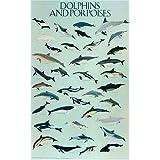 Dolphins & Porpoises, Poster