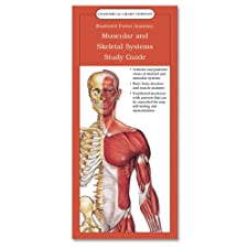 Anatomical Chart Company s Illustrated Pocket Anatomy The Muscular and Skeletal by Anatomical Chart Company