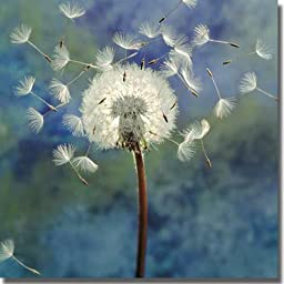 Artistic Home Gallery 1818646S Dandelion by Wans Premium Stretched Canvas Wall Art
