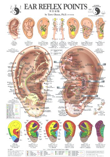 Ear Reflex Points Chart (Chinese Edition) (Auricular Chart compare prices)