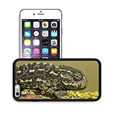 buy Luxlady Premium Apple Iphone 6 Plus Iphone 6S Plus Aluminum Backplate Bumper Snap Case Image Id 21483049 Close Up View Of A Baby Mediterranean Chameleon On A Branch