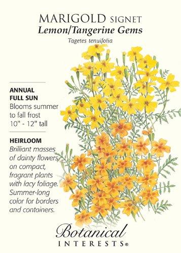 Marigold Signet Lemon Tangerine Gems Heirloom Seeds