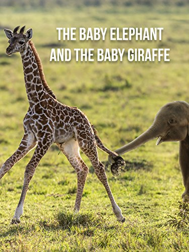 The Baby Elephant & The Baby Giraffe
