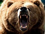 img - for Timothy Treadwell: Bear