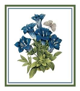 Gentian Flower By Pierre Joseph Redoute
