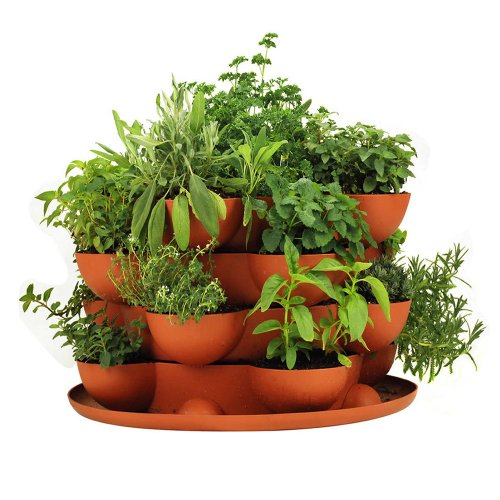 Stackable-Gardening-Strawberries-Containers-Compliment