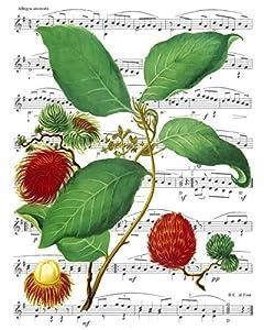 Amazoncom Victorian Era Art Fruit Print Rambootan