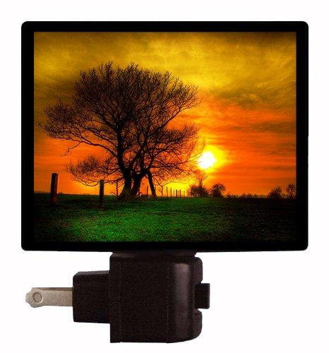 Sunset Night Light - Tree And Setting Sun front-1060519