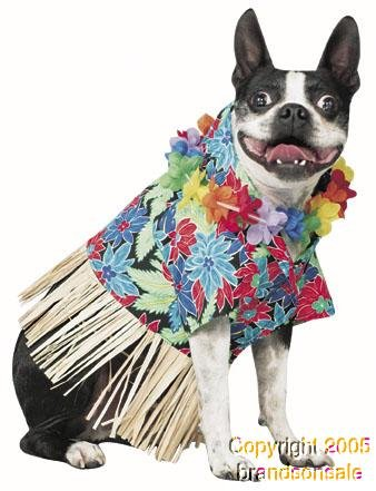 Pet Tiki Hawaiian Dog Costume For Small Dogs