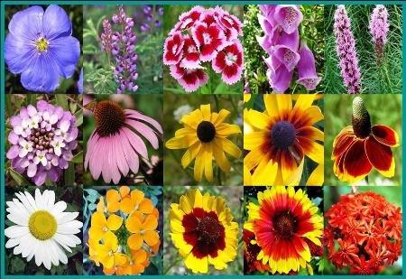 All Perennial Wildflower Mix - 200 Seeds - Seed Needs Envelope