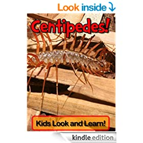 Centipedes! Learn About Centipedes and Enjoy Colorful Pictures - Look and Learn! (250+ Photos of Centipedes)
