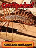 img - for Centipedes! Learn About Centipedes and Enjoy Colorful Pictures - Look and Learn! (250+ Photos of Centipedes) book / textbook / text book