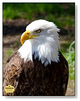 American Bald Eagle Notebook - A regal image of the American Bald Eagle graces the cover of this blank and wide ruled notebook with blank pages on the left and lined pages on the right.