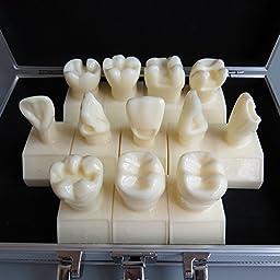 Dentalmall® 1 Pc Dental Model #7009 01 - Cavity Preparation Model