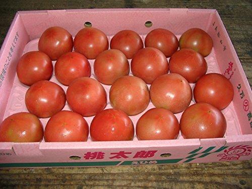 愛媛県等 産 トマト Lサイズ 約4kg入り 18~20玉詰め