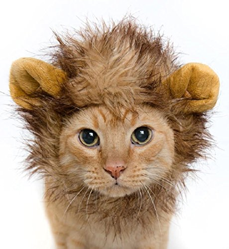 GenLed Lion Mane Dog Cat Costume and Complimentary Feathered Catnip Toy (Air Vaccume Tools compare prices)