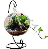 【19blue】 丸型 テラリウム アクアリウム ガラス 花瓶 ハンギング スタンド (10cm)