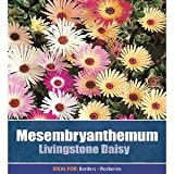 De Ree Daisy Livingstone Mesembryanthemum Garden Flower Plant 1500 Seeds