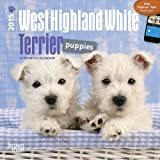 BT West Highland White Terrier Puppies 2015 Mini