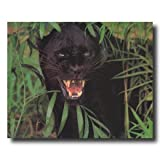 Black Leopard Cat Close Up # 1 Wildlife Home Decor Wall Picture 16x20 Art Print