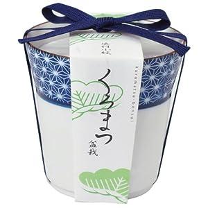 染付小紋盆栽栽培セット 黒松 GD-45201
