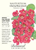 Heirloom Nasturtium Cherry Rose Jewel Seeds 25 Seeds