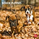 Boxer Puppies 2013 Square 12X12 Wall...