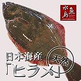魚水島 天然ヒラメ 平目 日本海産 3.0~3.4キロ物